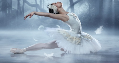 On Tour: Swan Lake